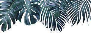Feuilles tropicales d'été sur le fond blanc image libre de droits