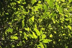 Feuilles tropicales de forêt Photo libre de droits