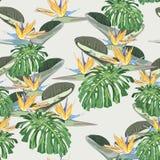 Feuilles tropicales lumineuses avec des usines de jungle Le modèle tropical de vecteur sans couture avec des feuilles de monstera illustration stock