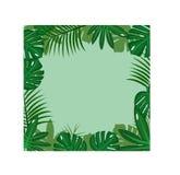 Feuilles tropicales vertes sur le fond vert Photos stock