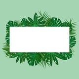 Feuilles tropicales vertes sur le fond vert avec le cadre blanc Photographie stock