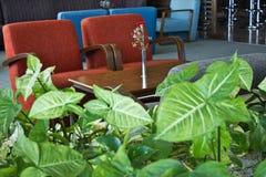 Feuilles vert clair d'une plante grimpante avec un contexte de tapisser Photographie stock libre de droits