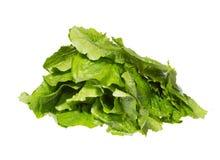 Feuilles vert clair de salade dans une pile Image stock