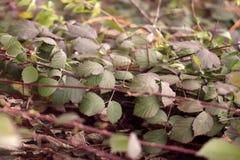 Feuilles vertes au sol en automne photographie stock libre de droits