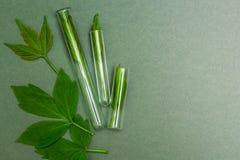 Feuilles vertes dans des tubes, vue supérieure Homéopathie, l'espace pour le texte photographie stock libre de droits