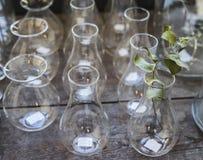 Feuilles vertes dans le verre Photo libre de droits