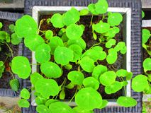 Feuilles vertes dans un cadre blanc images stock