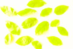 Feuilles vertes de belle texture et jaunes abstraites d'arbre d'isolement sur le modèle et le papier peint blancs de fond photos libres de droits