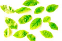 Feuilles vertes de belle texture et jaunes abstraites d'arbre d'isolement sur le modèle et le papier peint blancs de fond images libres de droits