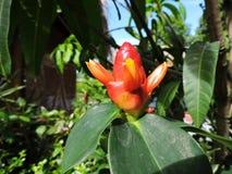 Feuilles vertes de feuille de fleurs rouges de fleur Images libres de droits