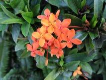 Feuilles vertes de feuille de fleurs rouges de fleur photographie stock libre de droits