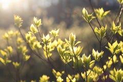 Feuilles vertes de jeunes d'arbre Photographie stock libre de droits