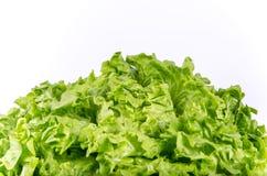 Texture des feuilles de laitue de vert de ressort d'isolement sur un backg blanc Photo stock