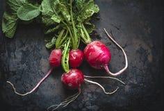 Feuilles vertes de petit morceau juteux rouge de radis photos libres de droits