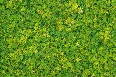 Feuilles vertes et jaunes Photo libre de droits
