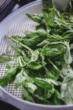 Feuilles vertes fraîches de basilic sur un dessiccateur de déshydrateur de grille photographie stock