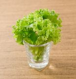 Feuilles vertes fraîches de laitue en petit verre Photos stock