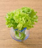 Feuilles vertes fraîches de laitue en petit verre Images libres de droits