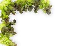 Feuilles vertes fra?ches de salade de laitue d'isolement sur le fond blanc images libres de droits