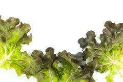 Feuilles vertes fra?ches de salade de laitue d'isolement sur le fond blanc photographie stock