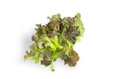 Feuilles vertes fra?ches de salade de laitue d'isolement sur le fond blanc photos libres de droits