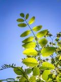 Feuilles vertes ombragées lumineuses et ciel bleu photo stock
