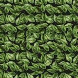 Feuilles vertes sur le fond de nature Modèle sans couture de feuillage de vert de vecteur illustration de vecteur
