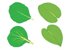 Feuilles vertes sur le vecteur blanc d'illustration de fond illustration stock