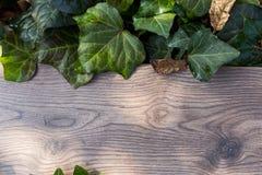 Feuilles vertes texturisées sur la planche en bois Photo stock