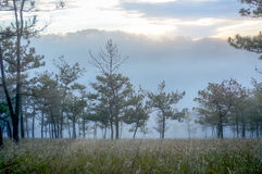 18, fevereiro Névoa 2017 de Dalat- sobre o pinho Forest On Sunrise Background e a nuvem beautyful em Dalat- Lamdong, Vietname Imagens de Stock