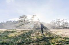 18, fevereiro 2017 - Raios e névoa sobre a floresta Dalat- Lamdong do pinho, Vietname Fotografia de Stock Royalty Free
