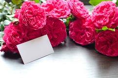 Few beautiful roses stock images