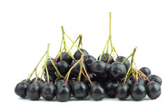 Few black chokeberry clusters Royalty Free Stock Image