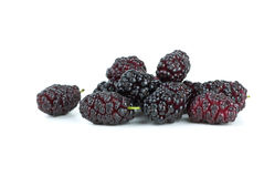 Few black mulberries Stock Photography