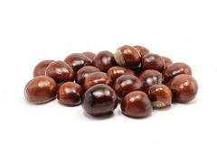 A few brown chestnuts Royalty Free Stock Photos