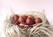 Few brown eggs in the nest, Easter, boiled eggs. Many brown eggs in the nest, Easter, boiled eggs, many brown eggs in the nest, Easter, boiled eggs stock image