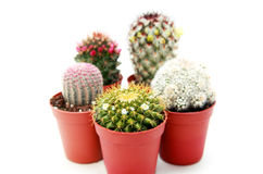 Few cactuses Stock Photos