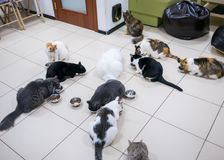 Few cats eating dry pet food together. At modern cat cafe stock images