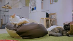 Few cats resting