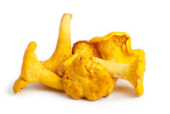 Few chanterelle mushrooms Royalty Free Stock Images