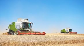 A few combines cutting a swath through the middle of a wheat field during harvest.  Stock Images