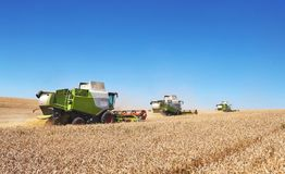 A few combines cutting a swath through the middle of a wheat field during harvest.  Royalty Free Stock Photos