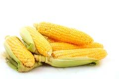 Few corn Stock Image