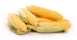 Few corn isolated Royalty Free Stock Photos