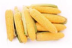 Few corn isolated Stock Photos