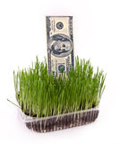 Few dollars in green grass isolated Stock Photo