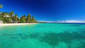 Few drzewka palmowe nad tropikalną laguną zbiory wideo