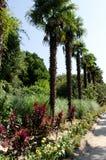 Few drzewka palmowe w ogródzie Zdjęcie Stock