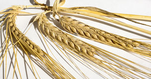 A few ears of golden wheat Royalty Free Stock Photo