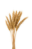Few ears of wheat Stock Photography